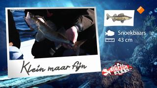 Een bijna-orgastische visvangst voor Klaas