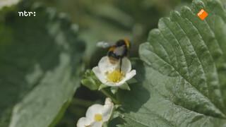Hommels en bloemen