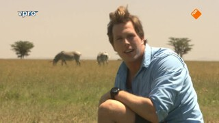Kenia - Kuddedieren
