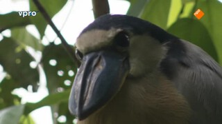 Belize - Pinda's en vreemde vogels