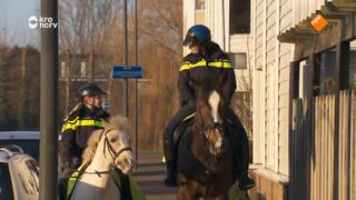Kan mijn pony net zo stoer worden als een politiepaard?