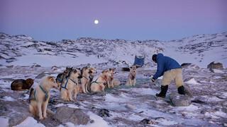 Natuur Op 2 - De Noordpool