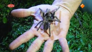 Bang voor spinnen?