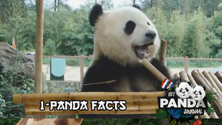 #1 Panda Facts | Pandajournaal