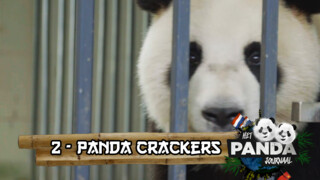 Panda Crackers #2