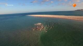 Helden van de Wildernis: Mozambique