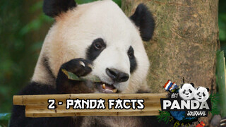 #2 Panda Facts | Pandajournaal
