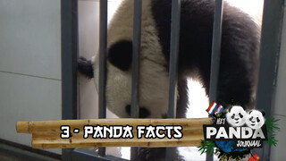 #3 Panda Facts | Pandajournaal
