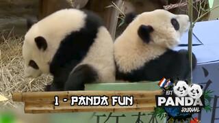 #1 Panda Fun | Pandajournaal