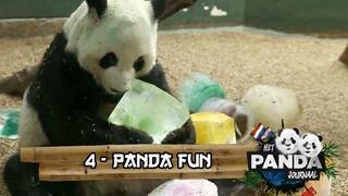 #4 Panda Fun | Pandajournaal