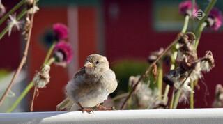 Vroege Vogels in de klas