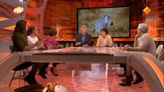 Waarom zijn zebra's zwart-wit gestreept?