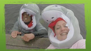 Moeten we bang zijn voor haaien?