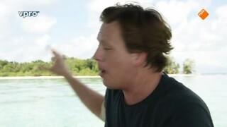 Freeks Wilde Wereld - Haaien Beschermen