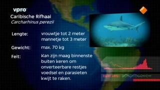 Freeks Wilde Wereld - Het Haaienparadijs