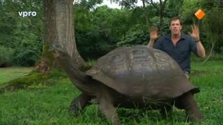 Alleen op de Galapagos