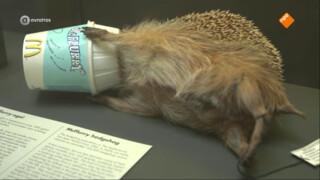 Tragische botsingen tussen mens en dier