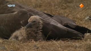 Freeks Wilde Wereld - Piratenvogels