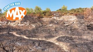 Dodelijke bosbranden Portugal en ondoorzichtige prijzen