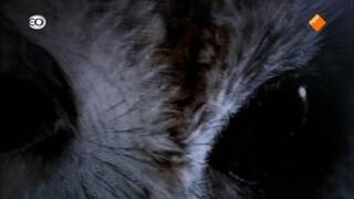 Het mysterie uil