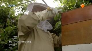 Honing uit Hoorn
