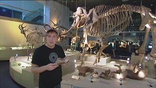 Het Klokhuis Prehistorische dieren