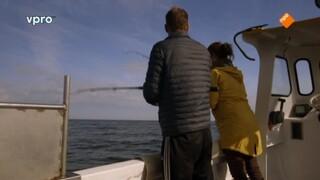 Makreel uit Egmond aan Zee