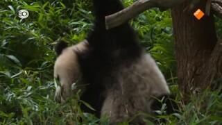 Natuur op 2: Superschattige dieren
