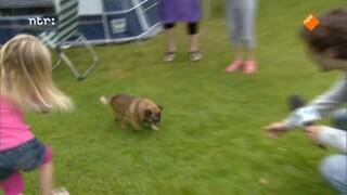 Zapp Skills - Met De Hond Omgaan
