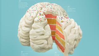 Wetenschap Om Op Te Vreten - Voedsel Voor Het Brein