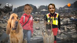 Hoe kunnen honden helpen na een aardbeving?