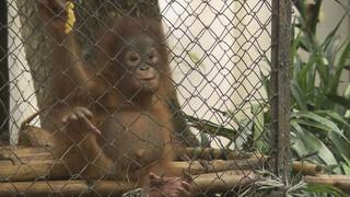Orang-Oetan opvangcentrum