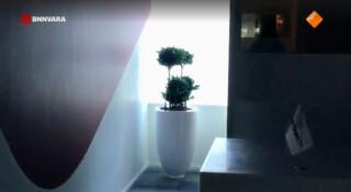 All you need is... een kamerplant
