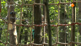 'Veel mis met veiligheid klimbossen'