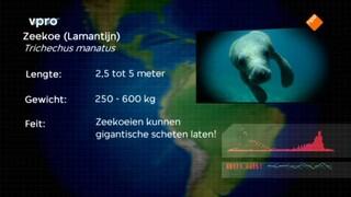 Freeks wilde wereld Belize - Reuzen van de zee