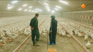Sofie op bezoek bij de 25.000 kippen