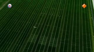 Fryslân DOK Blauw de hemel, groen het gras (3/3)