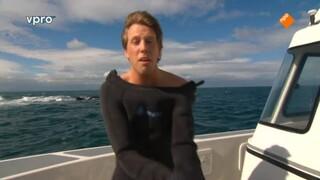Freek in het wild Witte Haai