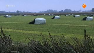 Vandalisme teistert boeren land van Maas en Waal