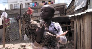 Mensjesrechten - Kippen Voor Kimaru