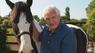 David Attenborough's Rariteitenkabinet - Bijzondere Tellers
