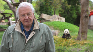David Attenborough's Rariteitenkabinet - Extreme Babies