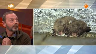 André Donker over dieren in de wintertijd