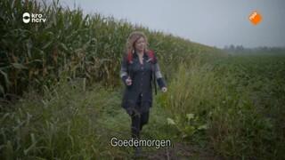 Mijn pelgrimspad Van Dalfsen naar Zwolle