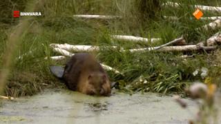 Evi spot wilde beesten in Canada