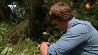 Freeks wilde wereld Berggorilla's