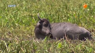 Freeks wilde wereld Op safari in Sri Lanka