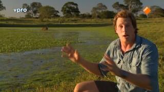 Freeks Wilde Wereld - Dieren Op Laag Water!