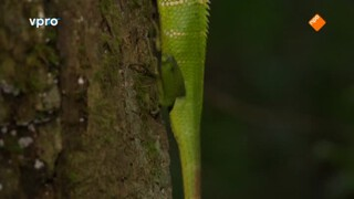Freeks Wilde Wereld - Het Plantenparadijs