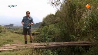 Freeks wilde wereld Bewoners van het bamboebos